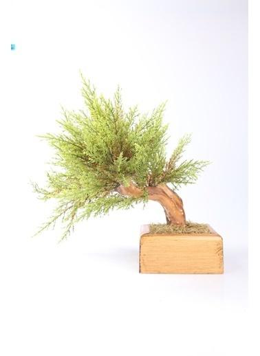 Kibrithane Çiçek Yapay Ağaç Doğal Ağaç Gövdeli Bonsai Kc00300021 Renkli